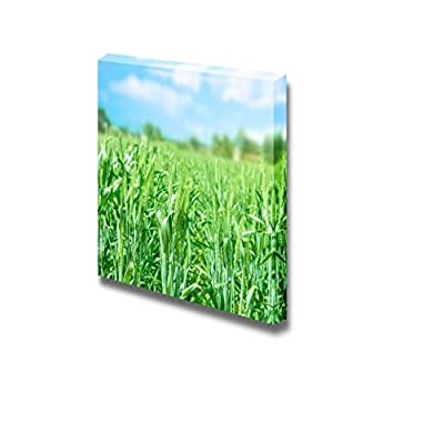 Premium Creation, Delightful Creative Design, Beautiful Scenery Fresh Wheat Field Under Blue Sky Wall Decor
