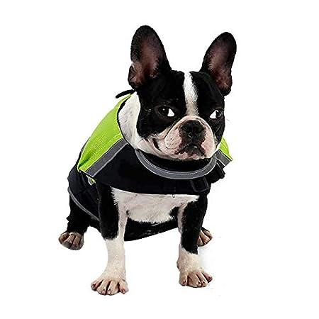 Doglemi - Chaleco Salvavidas Impermeable para Perro, Ideal para el Verano y el Invierno: Amazon.es: Productos para mascotas
