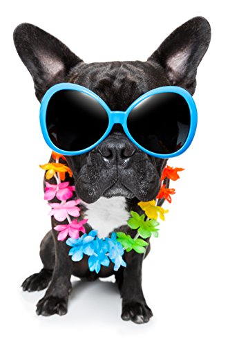 Hawaiian Black French Bulldog Puppy with Sunglasses Vinyl Decal Sticker - Sunglasses Bulldog French