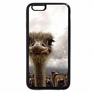 iPhone 6S / iPhone 6 Case (Black) Ostriches