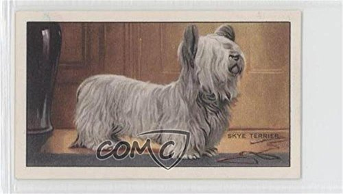 Skye Terrier (Trading Card) 1936 Gallaher Dogs Series 1 - Tobacco [Base] #3
