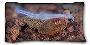 Custom ( Animals fish corals underwater ) Custom Zippered Pillow Case 20x36 inches(one sides) from Surprise you suitable for King-bed PC-Green-16950