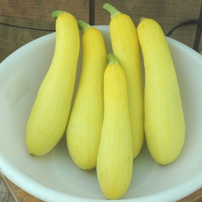 Squash Cheetah F1 Seeds - Vegetable Seeds Package - 5,000 Seed Package - 5000 Cheetah