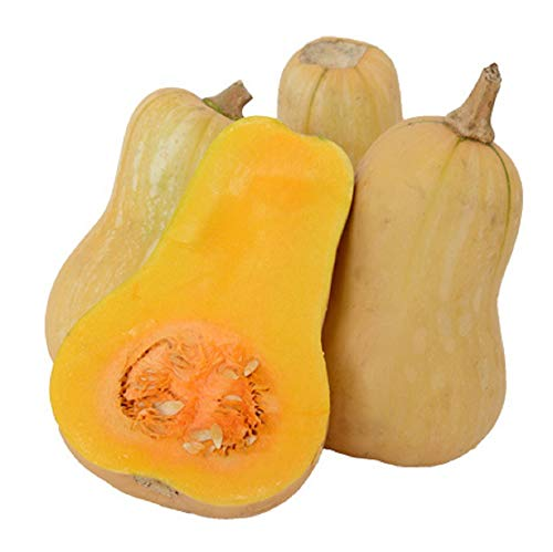 David's Garden Seeds Squash Winter Waltham Butternut WR6711 (Tan) 50 Non-GMO, Heirloom Seeds ()