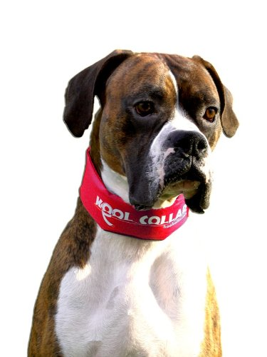 Kool Collar Stop Sign - 1
