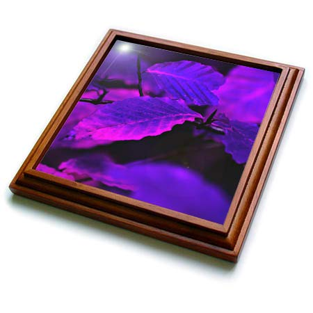 3dRose Stamp City - abstract - An abstract photograph of autumn leaves in purple and pink. - 8x8 Trivet with 6x6 ceramic tile (trv_304359_1) ()