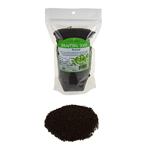 Organic Broccoli Sprouting Seeds - 16 Oz (1 Lbs)- Organic- Edible Seed, Gardening, Hydroponics, Growing Salad Sprout & Food Storage- Brocolli Sprouts Contain Sulforaphane