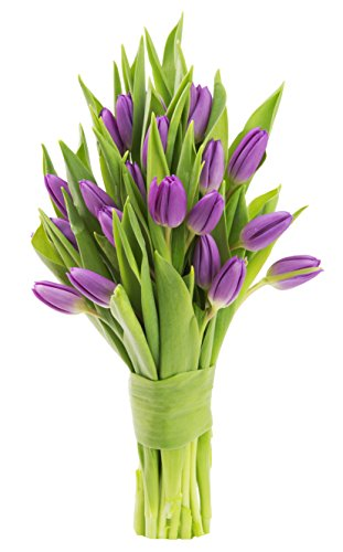 - Blooms2Door 20 Purple Tulips (Farm-Fresh Flowers, Cut-to-Order, and Homegrown in the USA)