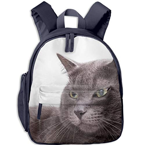 Quality Clear Backpacks in Blue Pink Black Heavy Duty Transparent Burmese Cat Adjustable Padded Straps Work, School, College, Kids Adults