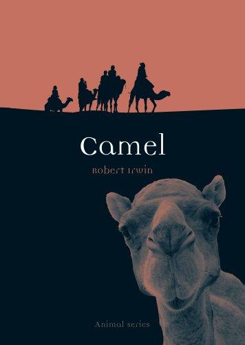 Working Camel - Camel (Animal)