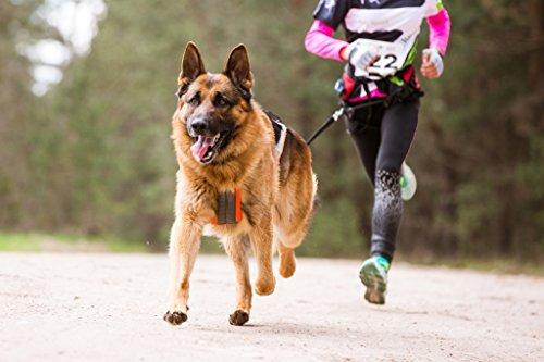 Jogging-Leine - Elastische und reflektierende 120 cm Hundeleine (bis 200 cm dehnbar) mit verstellbarem Hüftgurt aus reißfestem Nylon mit abnehmbarem Hüftbeutel - Ideal zum freihändigen Joggen, Spazieren und Wandern von Hundefreund (Blau)