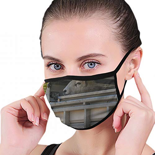 Mouth Mask,Merthyr Tydfil Wales April 2018 Sheep Industrial Mouth Covers, Sanitary Mask, Keep Warm In Cold, Protection From Dust, Germs, Allergies, Smoke, Pollution, Ash, Pollen For Men Women from Cool pillow