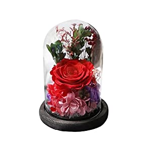 Amoleya 4.9 Inch Handmade Preserved Rose Enchanted Rose That Lasts in Glass Dome 100