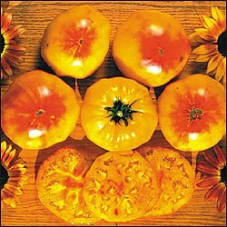 - Gold Medal Tomato - 20 Seeds - Extra Sweet Fruits