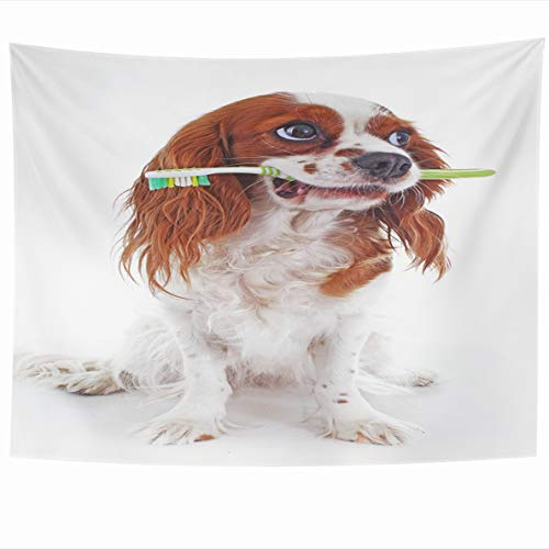 Ahawoso Tapestry 60x50 Inches Dog Toothbrush Cavalier King Charles Spaniel Unusual Cute Puppy On White Design Wall Hanging Home Decor Tapestries for Living Room Bedroom Dorm