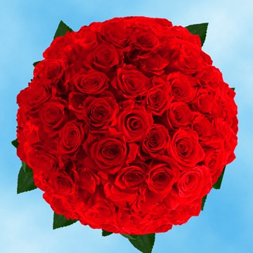 GlobalRose 150 Fresh Cut Dark Red Roses Long Stem - Black Magic Rose - Fresh Flowers Wholesale Express Delivery