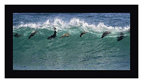 South Africa Seals Surfing in Waves by Bill Young - 18