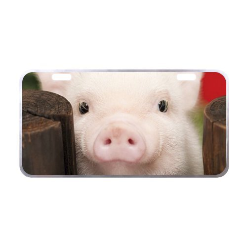 Little Lovely Cute Baby Pig License Plate with Beautiful Design-11.8