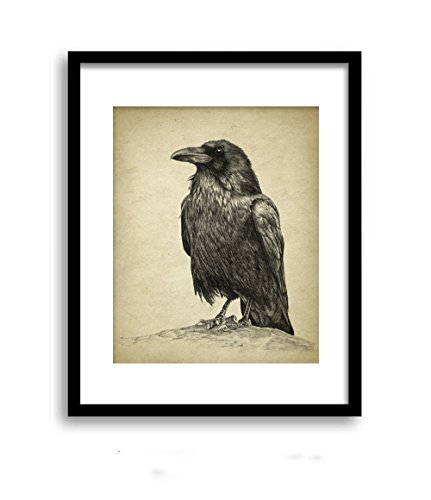 (QG Art Crow Bird Animal Fine Art Print Canvas Poster 20 x 25cm,No Frame )