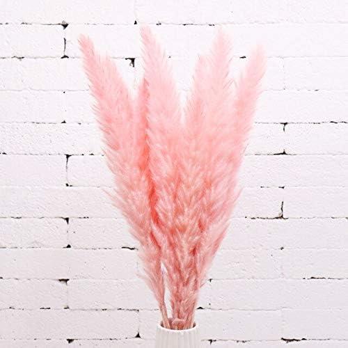 Amazon.com: Natural Dried Pampas Grass Phragmites Communis Reed Plants Wedding Flower Bunch Home Decor DIY Dried Flowers Pampas Grass - Pink - 20PC: Home & Kitchen