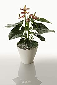 Maceta de autorriego Hidro+z en cerámica ecológica de 25cm - Maceta inteligente para todo tipo de plantas