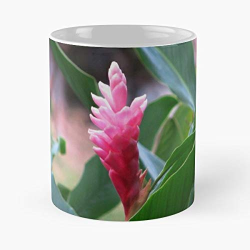 Bromeliad Flower Pink Tropical - 11 Oz Coffee Mugs Unique Ceramic Novelty Cup, The Best Gift For Holidays.