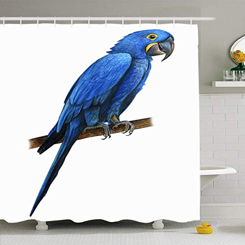 (Ahawoso Shower Curtain 72x72 Inches Feathers Blue Tropical Hyacinth Macaw Drawing Anodorhynchus Hyacinthinus Parrot Ara Beak Big Design Waterproof Polyester Fabric Set with Hooks )