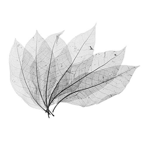 (MagiDeal 50pcs Natural Magnolia Skeleton Leaf Leaves Card Scrapbook Craft Supply Black)