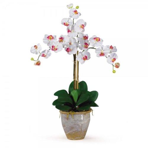 Phalaenopsis Orchid Flower Arrangement (White) (27''H x 23''W x 23''D)