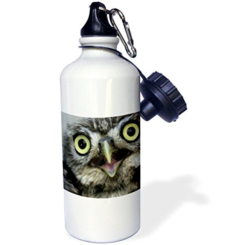 3dRose wb_9927_1 Little owl , Athena noctua, Aragon Spain Europe - Sports Water Bottle, 21 oz, White by 3dRose