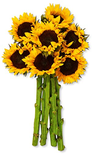 Mixed Garden Well Designed (Benchmark Bouquets Yellow Sunflowers, No Vase (Fresh Cut Flowers))