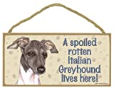 (SJT61942) A spoiled rotten Italian Greyhound (Grey & white color) lives here wood sign plaque 5