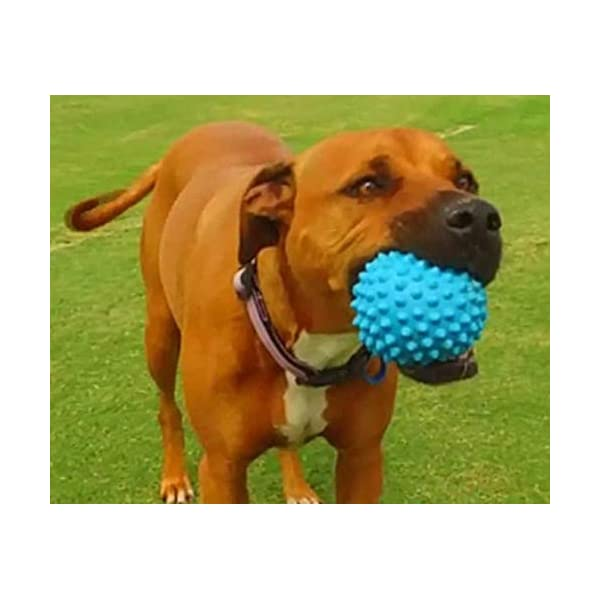 Aussie Dog Soft Catch Ball, Blue, Blue Click on image for further info. 6