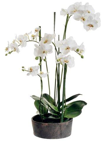 Phalaenopsis Silk Orchid Plant Cream (37