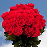 GlobalRose Fresh 50 Red Roses- Long Stem Flower Delivery