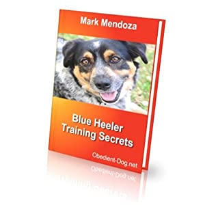 Queensland Heeler Training Secrets (Spanish Edition) 1