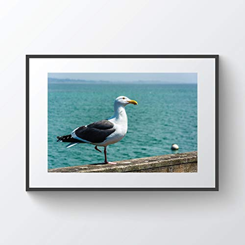 YourLoveLLC Wooden Frame Seagull On The Pier in Santa Cruz California Photo Print Metal Framed Black Wood Frame for Wall