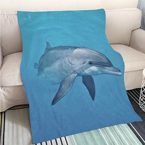- BEICICI Luxury Super Soft Blanket Curious Female Atlantic Bottlenose Dolphin Sofa Bed or Bed 3D Printing Cool Quilt