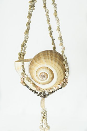 Sea Shell Plant Hanger with Tonna Shell | Umbonium Shell Small Sea Shell Hanger for Decoration | Shell Plant Hanger for Nautical Decor Indoor or Outdoor | Nautical Crush Trading TM