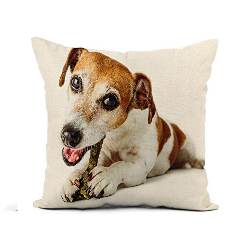 Awowee Flax Throw Pillow Cover Adorable Dog Jack Russell Terrier Enjoying Bone Treat 20x20 Inches Pillowcase Home Decor Square Cotton Linen Pillow Case Cushion Cover