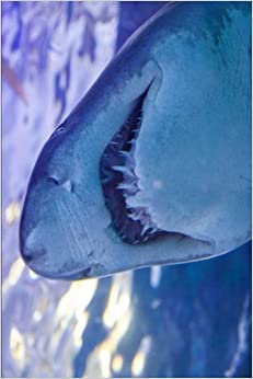 Grey Nurse Shark Ready for a Close Up Journal: 150 page lined notebook/diary