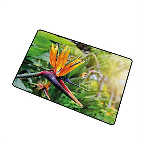 Bird Of Paradise Display - Becky W Carr Plant Universal Door mat Close-up Image of Strelitzia Reginae Bird of Paradise Flower Madeira Island Portugal Door mat Floor Decoration W19.7 x L31.5 Inch,Multicolor