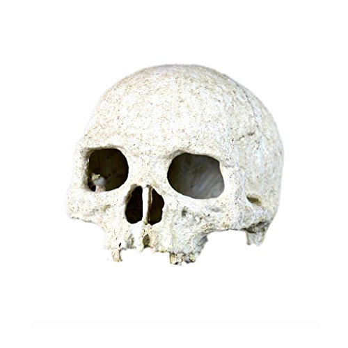 Modelo de Cráneo Humano Reptil Vivero Ornamento Decoración Terrarios Jardinería Bricolaje