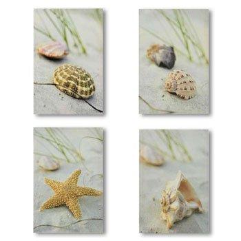 Beach seashells conch starfish wall art 4 prints decor
