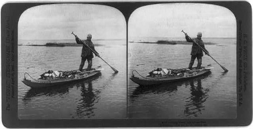 HistoricalFindings Photo: Coming back with a boat load,waterfowl,man standing in boat,c1904,photograph ()