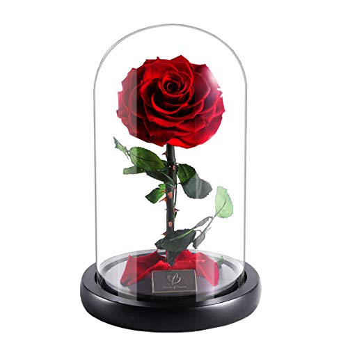 Beauty and The Beast Red Rose Enchanted Red Real Rose Handmade Preserved Rose with Gift Package Romantic Forever Gift for Mother