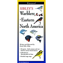 Sibley's Warblers of Eastern North Ameri