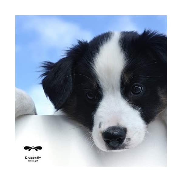 Dragonfly home & gift Dog Décor Border Collie Wall Art - Quote Print (8.5x11 Unframed) Pet Memorial Gifts | Dog Mom | New Puppy | Original Gifts for Dog Lovers 4