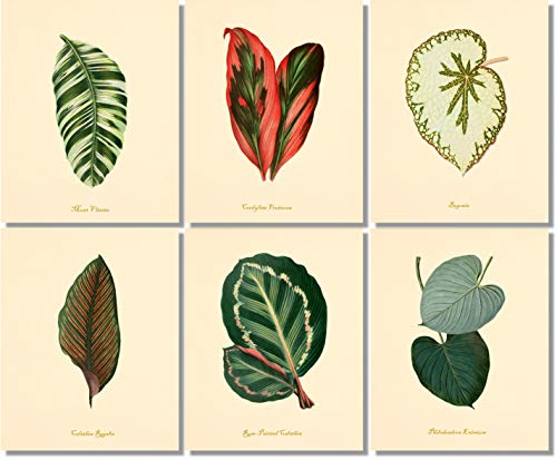 (Vintage Botanical Leaves Wall Art - Botanical Prints (Set of 6) - 8x10 - Unframed)