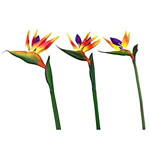 ShineBear Bird of Paradise – Big PU Real Touch Flower Decoration Artificial Flowers Wedding Flower Hotel Shopping Mart Party – (Color: 1 stem, Size: 80cm)